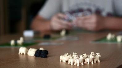 Černá ovce - zbývající zvířátka, Foto: Dušan Takáč