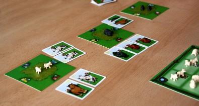 Černá ovce - rozehraná hra, Foto: Dušan Takáč