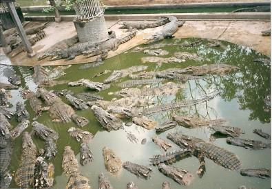 Pattaya - Krokodýlí farma, Foto: Michaela Dočkalová, Topzine.cz