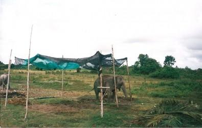 Sloní vesnice, Foto: Michaela Dočkalová, Topzine.cz