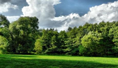 FOTO: Chovejme se k lesům lépe!