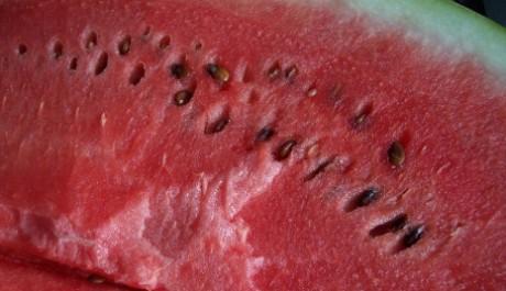FOTO: Vodní meloun