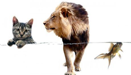KOLÁŽ: Z království zvířat