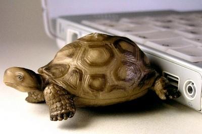 FOTO: Flash disk ve formě želvičky
