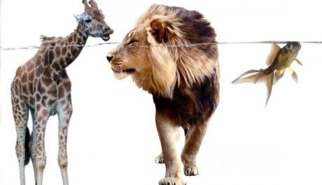 Lev je považován za nejsebevědomějšího ze zvířat