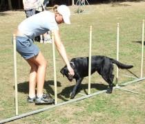 Foto:vodící pes