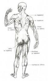 FOTO: Lidské tělo