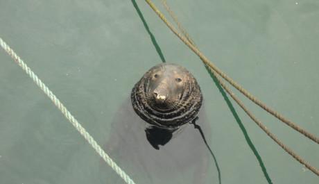 Foto: Lvoun v přístavu Howth