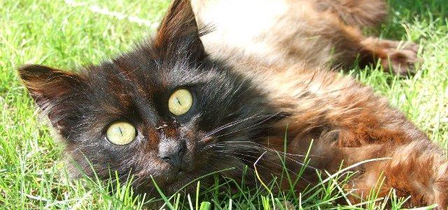 FOTO: Kočka