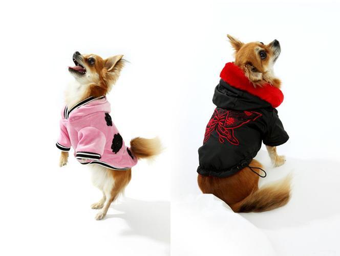setkat ženský psí styl