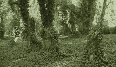 FOTO: Malostranský hřbitov