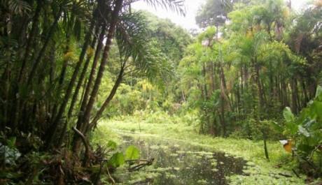 FOTO: Oblast řeky Amazonky - Amazonie