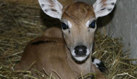 FOTO: Mládě antilopy
