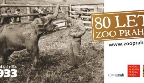 FOTO: 80 let Zoo Praha, slon Baby