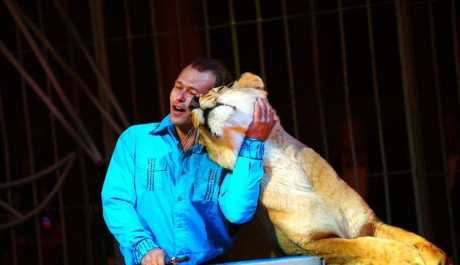 FOTO: Tomáš Ringel drezuruje lvice