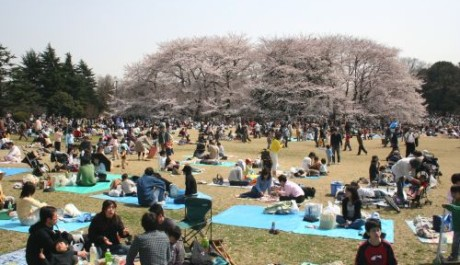 FOTO: Japonský piknik