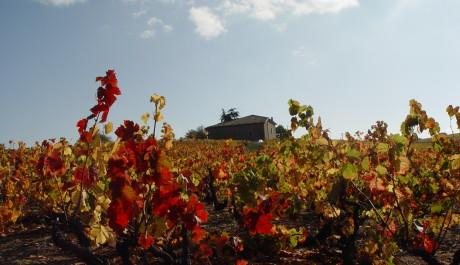 FOTO: Krajina Beaujolais - vinice