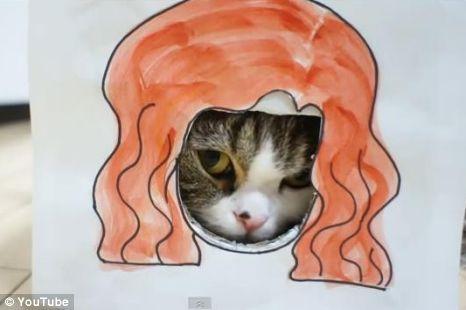 FOTO: Kočka Maru