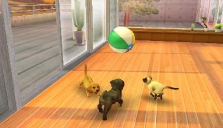OBR.: Pes a dvě kočky