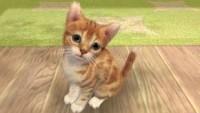 OBR.: Kočka