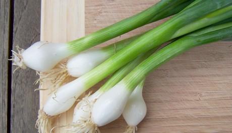 FOTO: Jarní cibulka