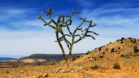 FOTO: Kaktus