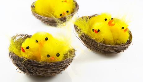 FOTO: Velikonoční dekorace: kuřátka v ošatce.