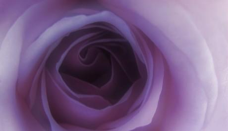 střed květu