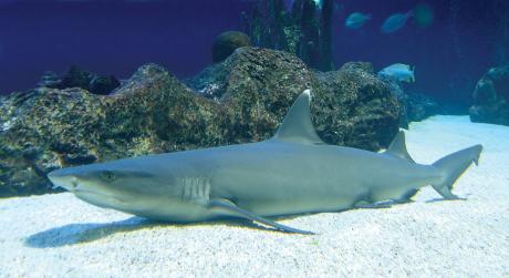 FOTO: Žraloci, proti nimž stařec bojoval