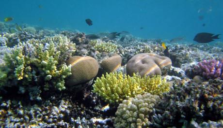 FOTO: Záleží na lidstvu, jak dokáže zachovat podmořské bohatství
