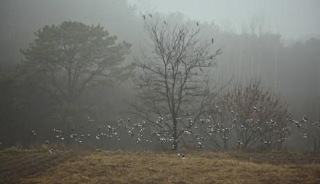 FOTO: Ahae zachycuje často volavky a straky v letu.