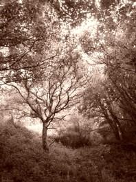Foto: strom-Kristyna-Pospichalova