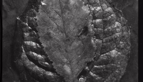 FOTO: Příchod podzimu (1932)