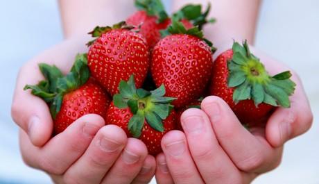 FOTO: Jahody v dlani