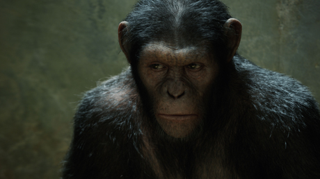 Foto: Obrázek z filmu Zrození Planety opic