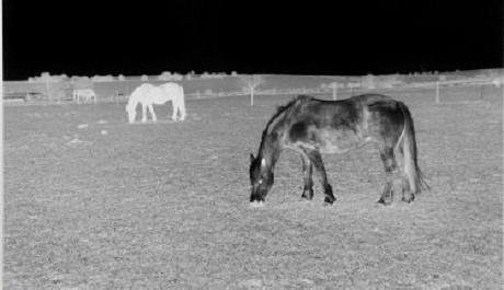 FOTO: Černý kůň, černá noc (Bílý kůň, bílý den), 2011
