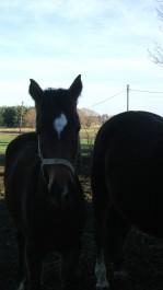 FOTO: Koně v Netlukách
