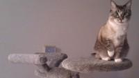 FOTO: Škrabadlo pro kočky alá Star Trek