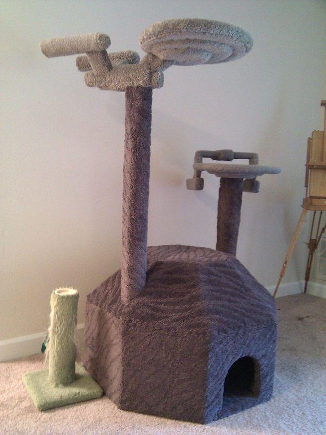 removal cat urine carpet
