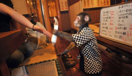 FOTO: Opičí číšník v restauraci Kayabukiya