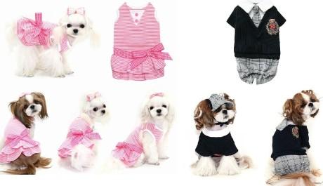 FOTO: Psí oblečení