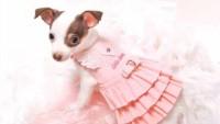 FOTO: Móda pro psy