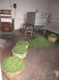 FOTO: Čaj v proutěných koších