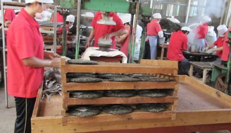 FOTO: Dělníci v manufaktuře na výrobu čaje