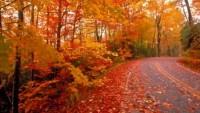 FOTO: Podzimní les
