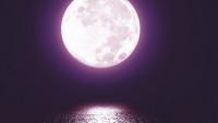 V měsíčním svitu Deana Koontze