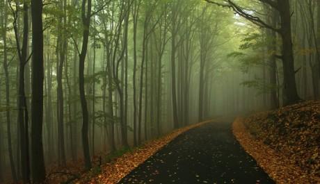 FOTO: Prestižní ocenění získal autor fotografie také za snímek mlžného lesa Česko-saského Švýcarska