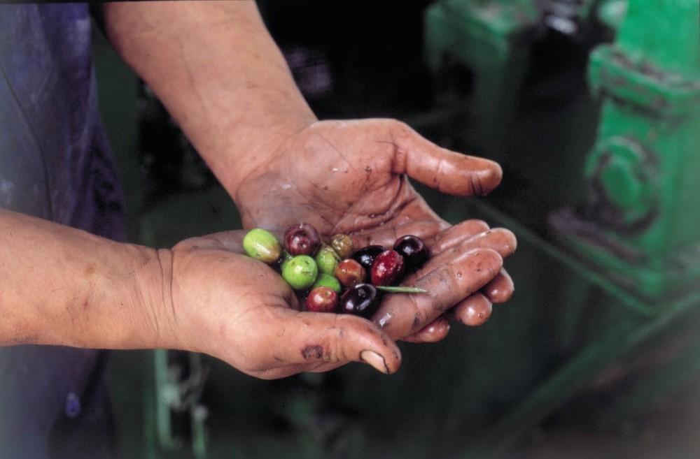 FOTO: Španěský olivový olej