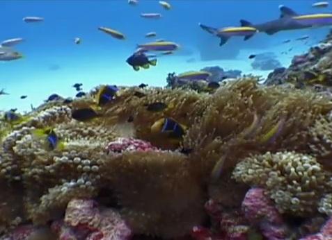 FOTO: Korálový útes