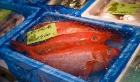 FOTO: Rybí trh, Tokio, Japonsko